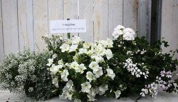 Blumen-Arrangements-Wolfsburg