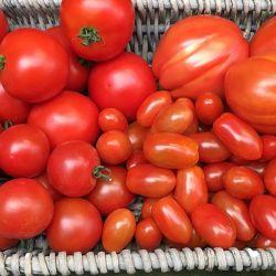 Aromatische-Tomaten-Wolfsburg