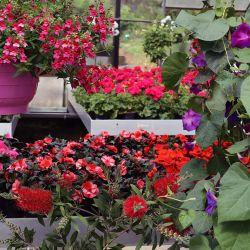Blumenampeln-Dieterichs